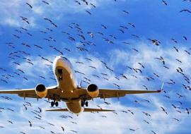 Челябинский экофонд поставил под угрозу авиасообщение в Баландино