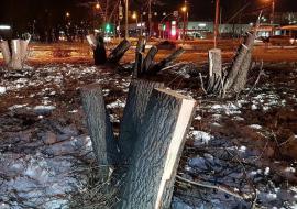 Жители Челябинска сообщили о массовой вырубке деревьев