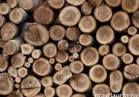 В Тюменской области незаконно вырубили лес на 1,5 миллиона