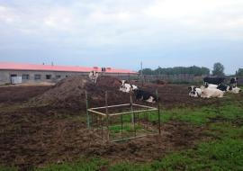 Свердловский муниципалитет отдал сельхозземли под коттеджи