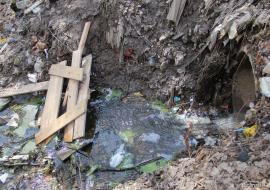 Прокуратура обвинила агрокомплекс «Горноуральский» в распространении кишечной палочки