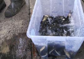«Водоканал» начал очистку Волчихинского водохранилища с мальков