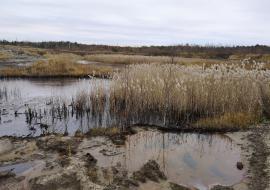 Населению Нижневартовска добавили токсинов. Экологи вскрыли новые сбросы нефтяных отходов на полигоне ТКО