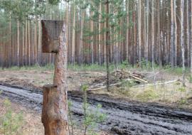 ОНФ доложил в прокуратуру об угрозе лесных пожаров в Челябинской области