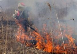 В муниципалитете Курганской области горит 254 гектаров леса