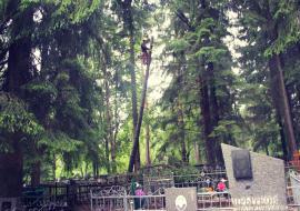 Прокуратура сообщила о незаконной вырубке деревьев на кладбище ЗАТО Озерск