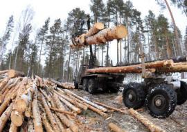 Главу ГКУ «Шумихинское лесничество» подозревают в массовой вырубке леса