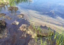 «Дочку» «Сургутнефтегаза» уличили в загрязнении водоемов и почвы вблизи Лянтора