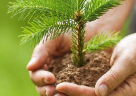 Власти Тюменской области увеличили план по восстановлению лесов до 7,6 тысячи гектаров