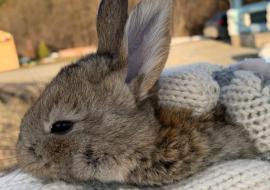 Детский центр «Парк сказов» под Екатеринбургом просит помощи для спасения животных