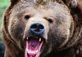 Медведь напал на детей в Приморье