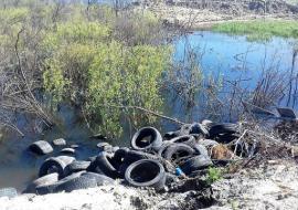 ОНФ привлек прокуратуру к загрязнению озера в Тюмени