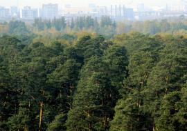 ОНФ вскрыл нелегальную торговлю лесами Челябинской области