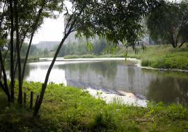 Экологические проекты ХМАО получили поддержку президента