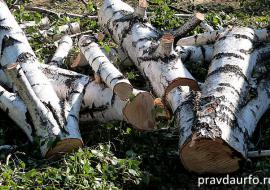 В ХМАО предали суду «черных лесорубов»