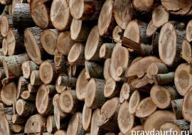 Прокуратура проверит законность вырубок леса под Югорском