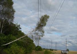 «Черные» лесорубы оставили без света 8 челябинских поселков