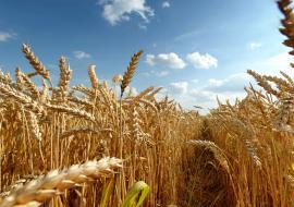 Челябинское предприятие АПК уличили в продаже опасного урожая