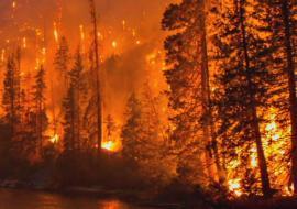 Прокуратура нашла вину курганских чиновников в лесных пожарах
