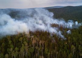 В Тюменской области зафиксированы лесные пожары на площади 314 гектаров