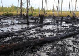 В ХМАО возбуждено уголовное дело о разливе нефти
