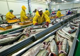 Тюменские рыбопроизводители открывают собственную торговую сеть