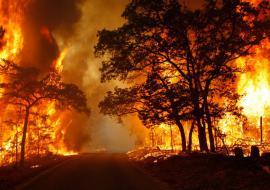 Власти ХМАО ввели режим ЧС из-за лесных пожаров