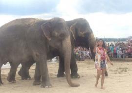 В челябинском озере искупали слонов