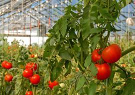 В Челябинской области реализовали инвестпроект в АПК «Горный» за 7,4 миллиарда