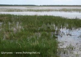 Дубровский направил ревизоров на загрязненное озеро. Экологи ждут подчиненных Кондратьева