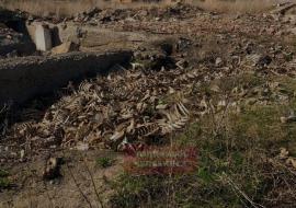 В Челябинской области жители обнаружили свалку скелетов крупного скота