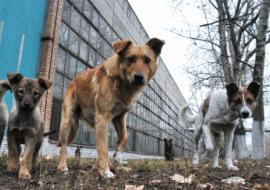 Бродячие собаки привели прокуратуру в департамент ЖКХ Нефтеюганска
