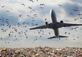 Экологи заявили об опасности свалки вблизи аэропорта Челябинска