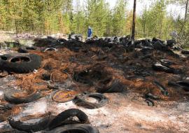 В Ноябрьске сотрудники «дочки» «Газпром нефти» очистят лес от 150 кубометров отходов