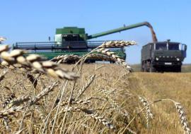 Аграрии Тюменской области собрали 1,3 миллиона тонн зерна