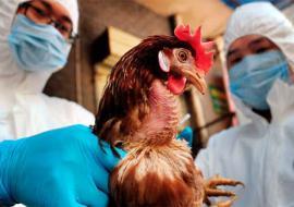 Власти Тюменской области компенсируют жителям и предприятиям ущерб от птичьего гриппа