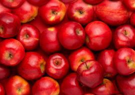 Ученые УрО РАН отправили в Дагестан из Екатеринбурга генетический материал плодовых культур