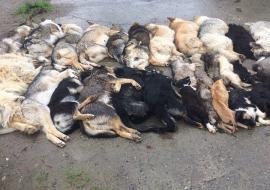 Зоозащитники Сургута делят деньги с трупов животных
