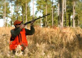 Челябинское правительство разрешило отстрел 7,5 тысячи косуль и лосей