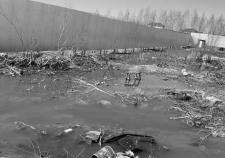 Мэрия Сургута поселила «Дай лапу» в канаву