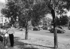 Подготовка к вырубке и посадке новых деревьев на улице Труда