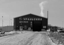 Свинокомплекс «Уральский» сворачивает деятельность в Полевском