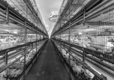 «Здоровая ферма» утопила 1 миллиард в помете