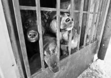 Предприниматели Нижневартовска закрыли муниципальный контракт в столице ХМАО незаконным отловом домашних животных