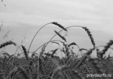 АПК Курганской области выживает в условиях безработицы и нехватки сельхозтехники