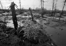 Природнадзор Югры предъявил «ЛУКОЙЛу – Западной Сибири» отравленный лесфонд