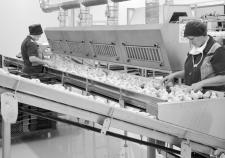Птицефабрика «Рефтинская» прячет убытки в прибылях производителей кормов