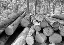 Котову привлекли в схему распила деревьев и вывода земли в Челябинске
