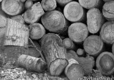 Ростехнадзор признал «Югорский лесопромышленный холдинг» несоответствующим лицензионным требованиям