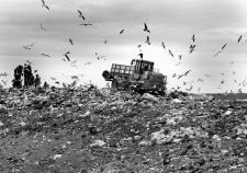 Шуховский полигон ТБО заплатит за организацию мусорного коллапса. Актив мэрии Кургана теряет остатки бюджета